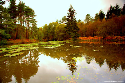Great Berry Pond 020