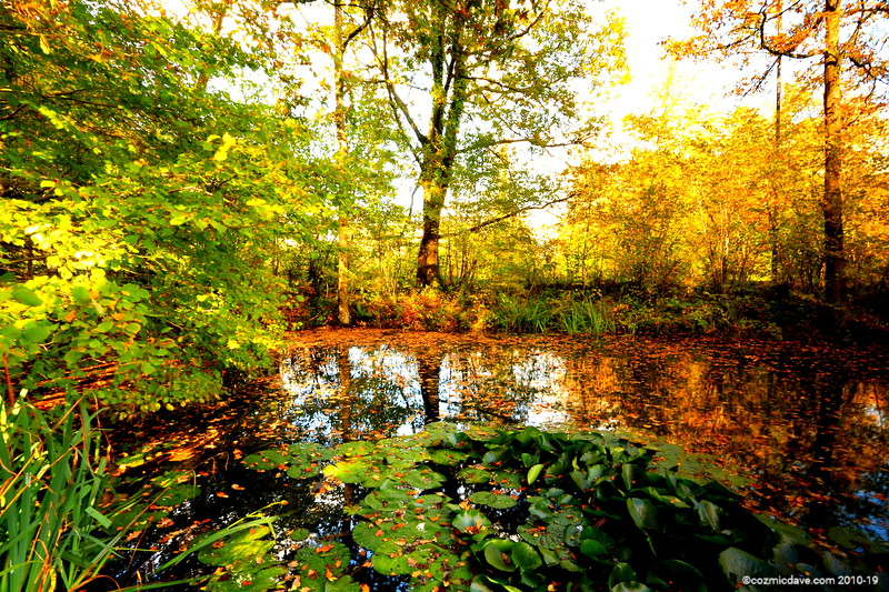 Stowfield Pond 001 (October 2014)