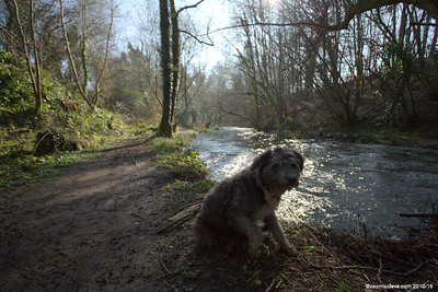 River Frome 012