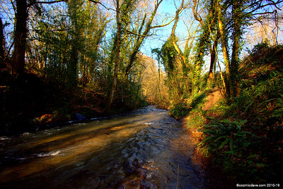 River Frome 006