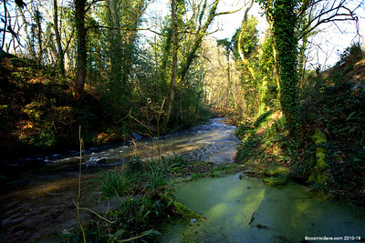 River Frome 005