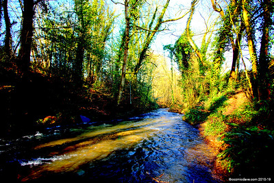 River Frome 007