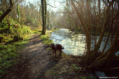 River Frome 011