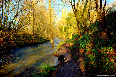 River Frome 009