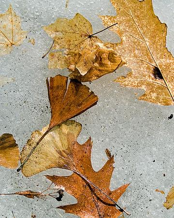 Frozen Leaf Collage