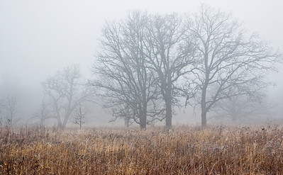 Winter Prairie 3