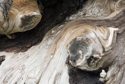 Driftwood Abstract - BC, Ca
