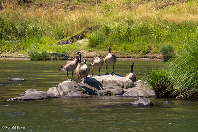 2012-07-21-Ashland-Rogue River-90