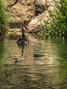 2012-07-21-Ashland-Rogue River-64