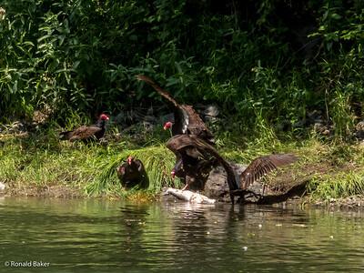 2012-07-21-Ashland-Rogue River-86
