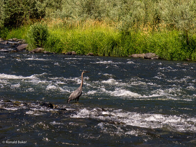 2012-07-21-Ashland-Rogue River-53