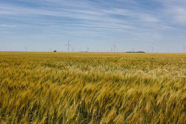 Kansas Wheat Field, Ensign KS (4 June 2015)