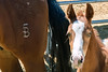 5B Quarter Horse Ranch, Cave Creek Az (29 May 2015)