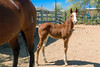 Please Take Me Home, 5B Quarter Horse Ranch, Cave Creek Az (29 May 2015)