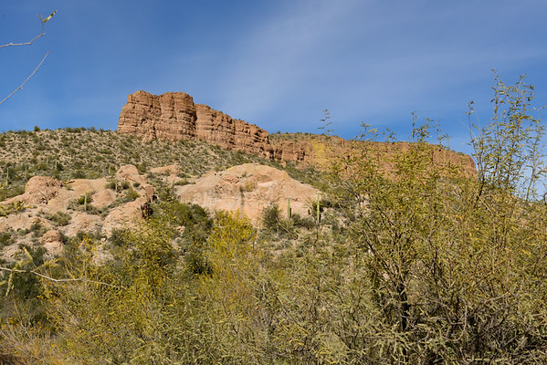 Tonto National Forest, Apache Junction AZ (January 2014)