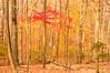 Trees fall Westc-2852