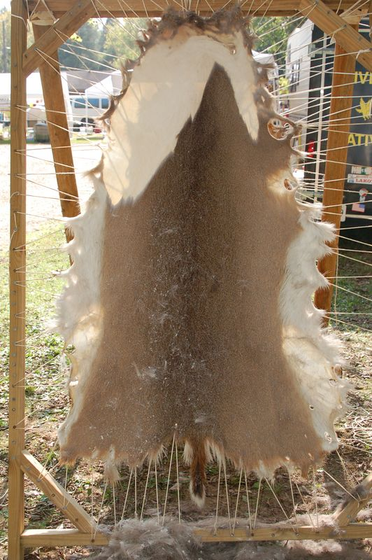 deer skin in process of having fur removed