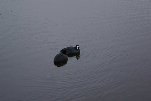 2007-02-01 Hamburg Germany