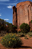 Monument Valley flora