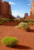Monument Valley flora 2