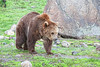 Sheena at home at the Montana Grizzly Encounter