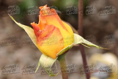 Redgold