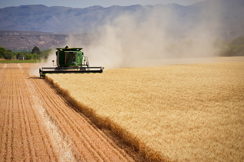 Drive 2011/06/10, Combine, Grain Field, Wheat