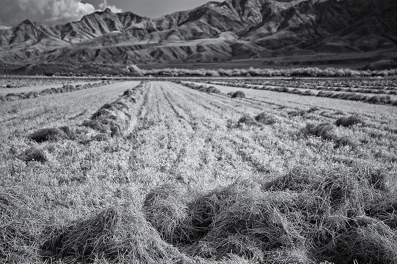 Landscape, Hayfield