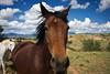 Drive 2011/09/16, Horse