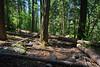 Mount Graham, Grant Creek