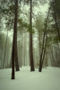 Mount Graham 2011-12-02