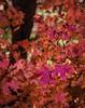 20121111_112712_NIKON D800