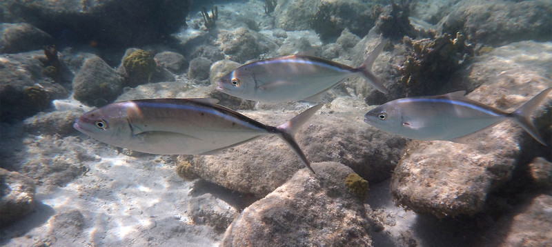 [insert name of fish here]<br /> Salt Pond Bay<br /> <br /> St. John, USVI<br /> March 2013