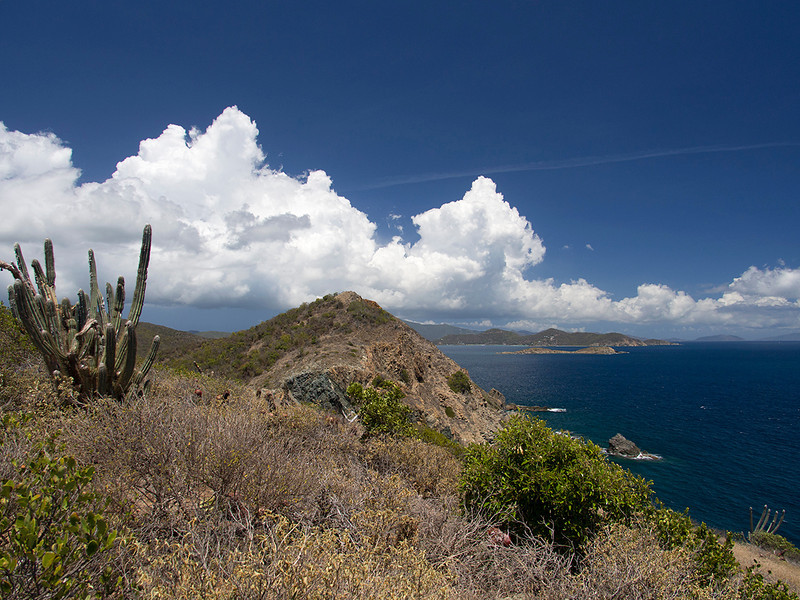 Cactus, clouds and the deep blue of Drunk Bay<br /> view from Ram Head Point<br /> <br /> St. John, USVI<br /> March 2013