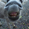 Donkey snout!<br /> Cinnamon Bay Campground<br /> <br /> St. John, USVI<br /> March 2013
