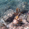 underwater river of fish<br /> Salt Pond Bay<br /> <br /> St. John, USVI<br /> March 2013