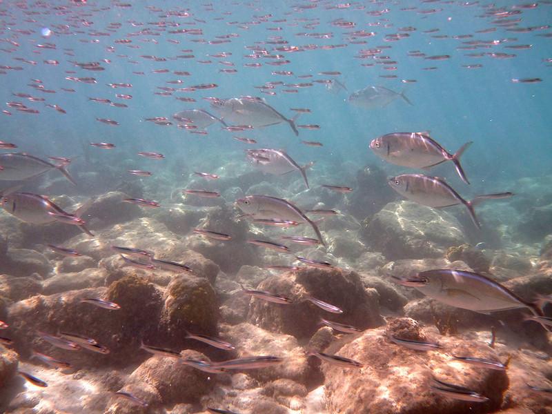 big fish, little fish<br /> Salt Pond Bay<br /> <br /> St. John, USVI<br /> March 2013