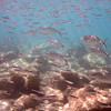 big fish, little fish<br /> Salt Pond Bay<br /> <br /> St. John, USVI<br /> March 2013