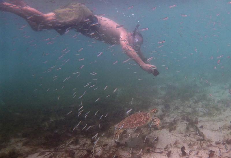 Eric & the Green Turtle<br /> <br /> Waterlemon Bay<br /> St. John, USVI<br /> March 2013