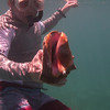 John and Queen Conch<br /> Salt Pond Bay<br /> <br /> St. John, USVI<br /> March 2013