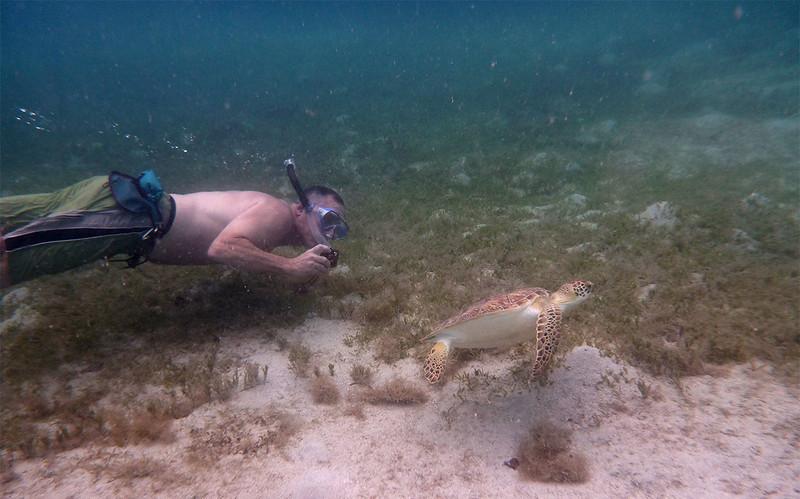 Eric the intrepid turtle photographer gets his shot<br /> <br /> Waterlemon Bay<br /> St. John, USVI<br /> March 2013