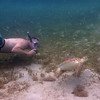 Eric the intrepid turtle photographer gets his shot<br /> <br /> Waterlemon Bay<br /> St. John, USVI<br /> March 2013