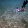 John, with Green Turtle in the lead<br /> Salt Pond Bay<br /> <br /> St. John, USVI<br /> March 2013