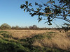 South Norwood Country Park