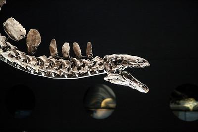 2015 02 27 Natural History Museum, London