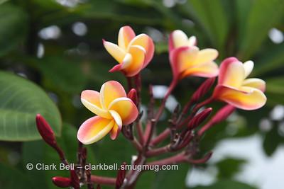 2015 Hawaii Trip 10