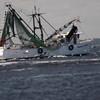 Shrimp boat and car carrier