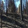 Forest Fire burn