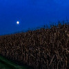 Moon over the cornfield - iPhone