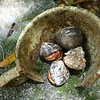 Hermit crabs' corral, behind Cinnamon Bay cottage #9